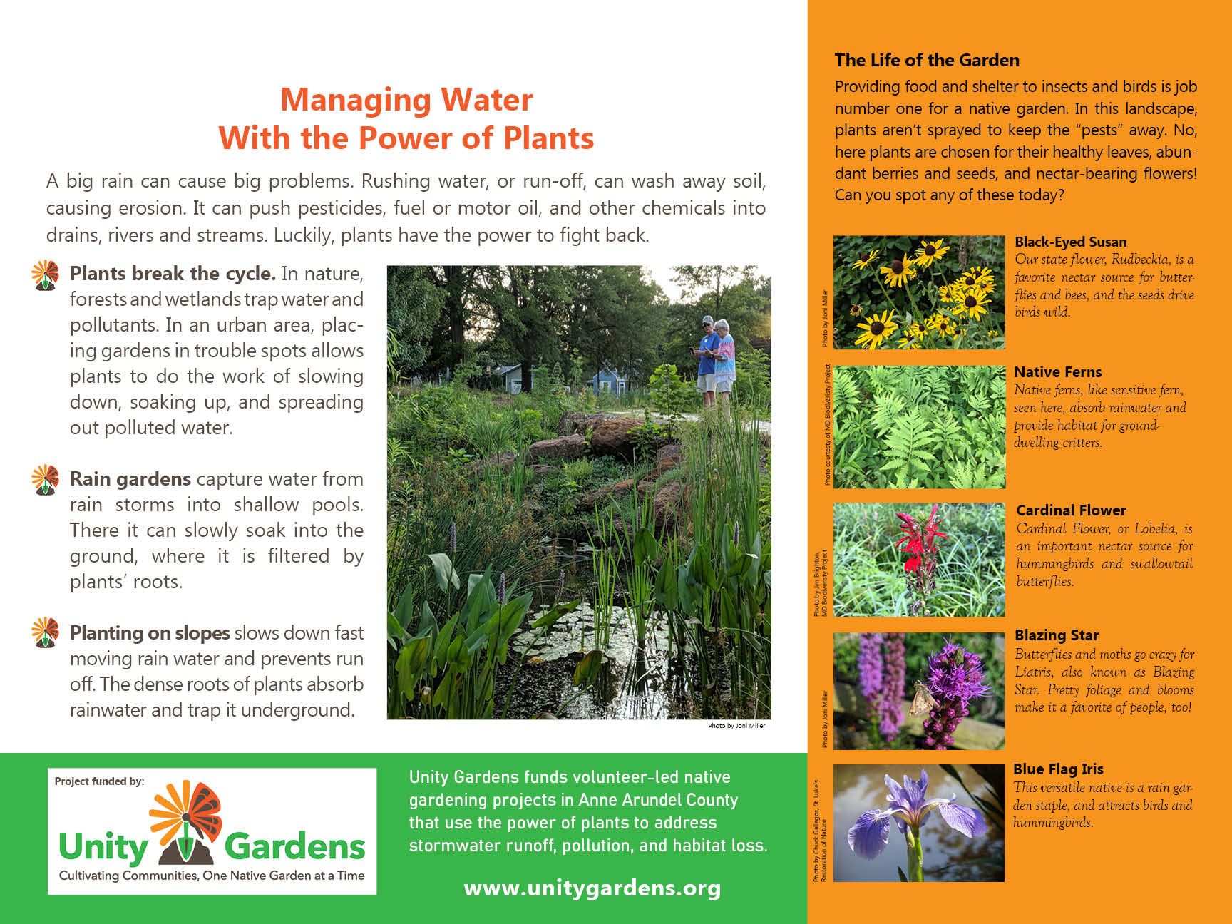Managing Water with Native Plants