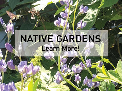 Choosing Native Plants